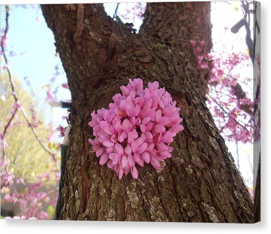Redbud Tree Two Thousand Twelve Canvas Print