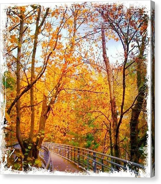 Apple Tree Canvas Print - Reed College Canyon Bridge To Campus by Anna Porter