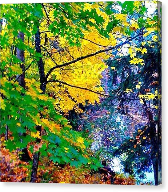 Apple Tree Canvas Print - Reed College Canyon Fall Leaves II by Anna Porter
