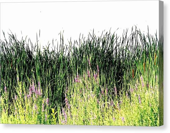 Reeds Lake Grass Canvas Print by Suzanne Fenster