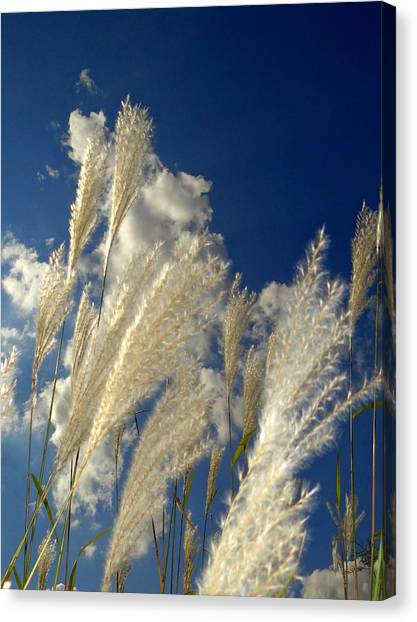 Reeds On A Sunny Day Canvas Print