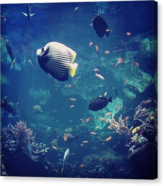 Tanks Canvas Print - Reefed  by Maria Bernal-Silva