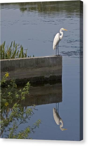 Reflecting Egret Canvas Print