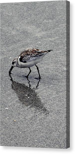Reflection Of A Lonely Bird Canvas Print