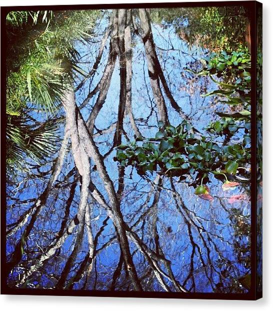 Ponds Canvas Print - #reflection #tree #cool #popularphoto by Mandy Shupp