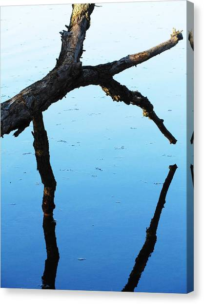 Reflections #1 Canvas Print by Todd Sherlock