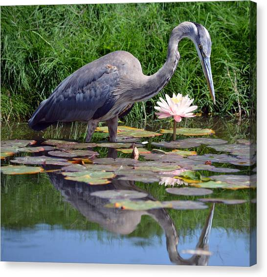Reflections At Lilly Pond Canvas Print