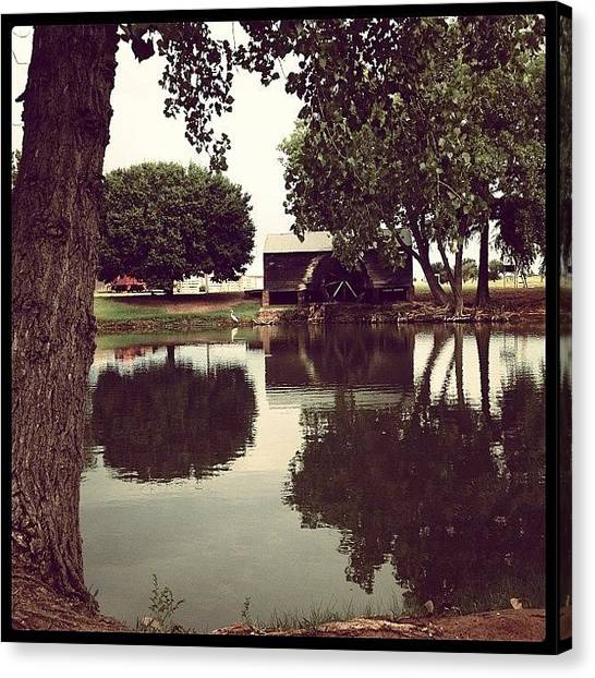 Large Birds Canvas Print - Reflections At The Park, And A Great by Marc Crow