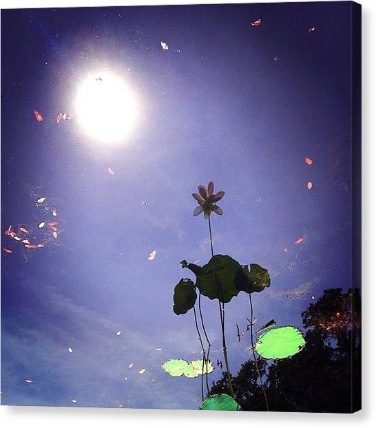 Lilies Canvas Print - Reflections On Sweet Water by Amy DiPasquale