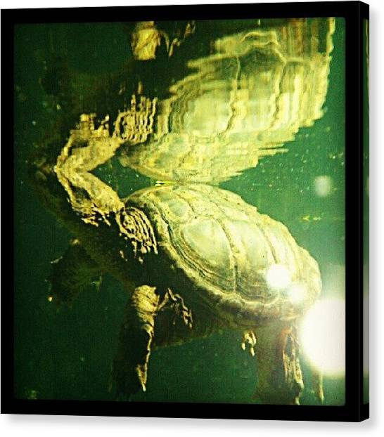 Turtles Canvas Print - Reflections. Turtle! Turtle! by Mr. B