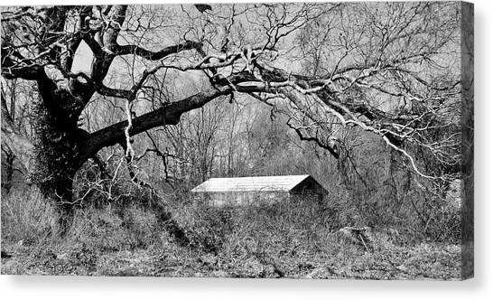 Relax Under My Tree Canvas Print