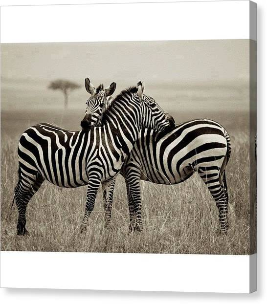 Kenyan Canvas Print - Repost Using #squaready by Owain Evans