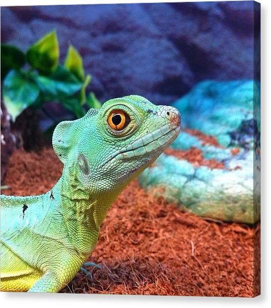 Lizards Canvas Print - #reptile #lizard #nature #naturaleza by Uriel Gonzalez