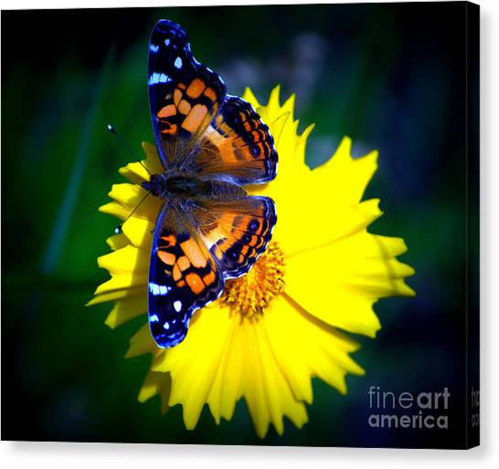 Resting Butterfly Canvas Print