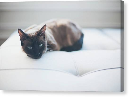 Cat Canvas Print - Resting Cat by Cindy Loughridge