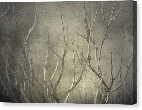 Reticent Canvas Print