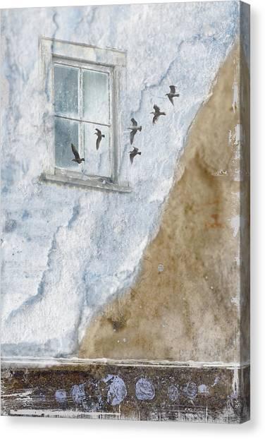 Seagull Canvas Print - Return Flight by Carol Leigh