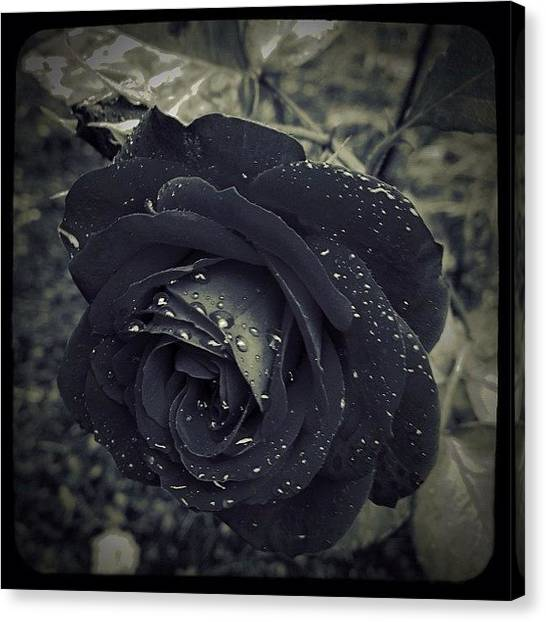 Red Roses Canvas Print - Revised: Corrected For Sharp Focus. Red by Christopher Hughes