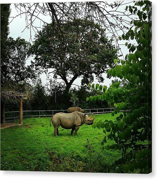 Rhinos Canvas Print - Rhino! 😏 #photooftheday by Ady Griggs