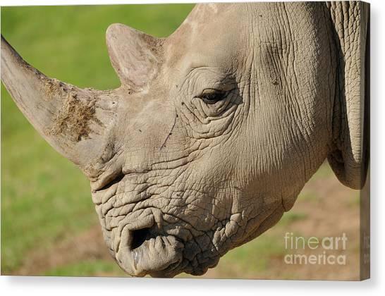 Rhino Canvas Print by Marc Bittan
