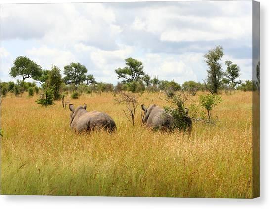 Rhino Pair Canvas Print by Deborah Hall Barry