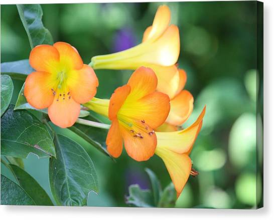 Rhododendron  Canvas Print by Andrea  OConnell