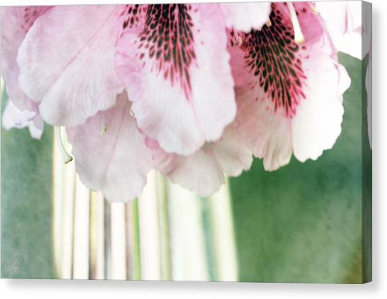 Rhododendron Refraction Canvas Print by Margaret Hormann Bfa