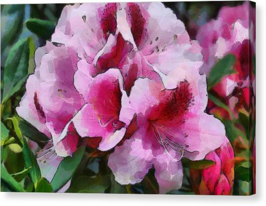 Rhododendrum Canvas Print
