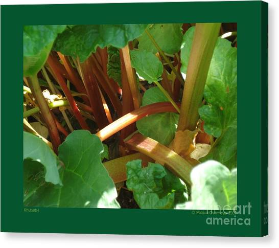 Rhubarb-i Canvas Print by Patricia Overmoyer
