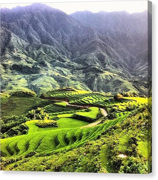 Vietnamese Canvas Print - #rice #paddies #sapa #vietnam #landscape by Universal Traveller