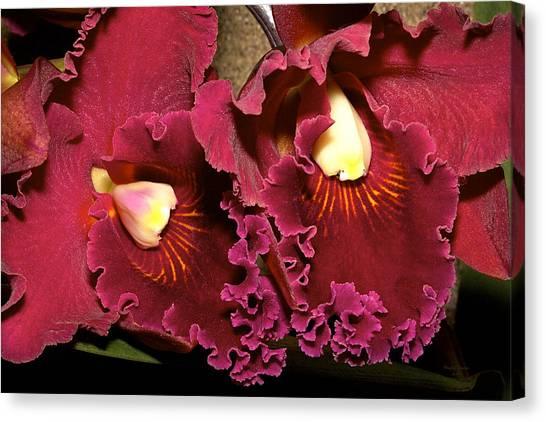 Rich Burgundy Orchids Canvas Print