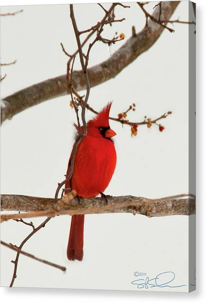 Righteous Cardinal Canvas Print