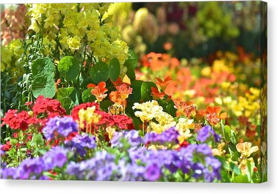 Riot Of Colours Canvas Print by Jyotsna Chandra