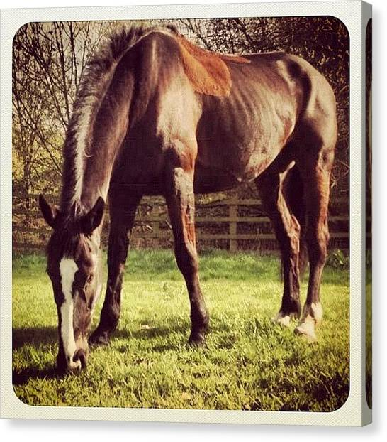 Thoroughbreds Canvas Print - R.i.p Black-jack:( Died Wednesday by Caitlin Hay