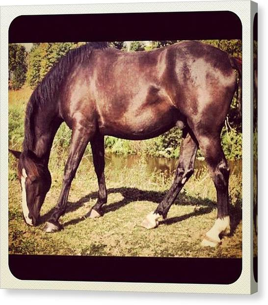 Thoroughbreds Canvas Print - R.i.p<3 by Caitlin Hay