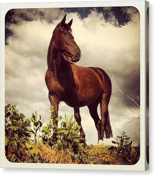 Hunting Canvas Print - R.i.p!<3 You Fantastic Boy!!<3 I Love by Caitlin Hay