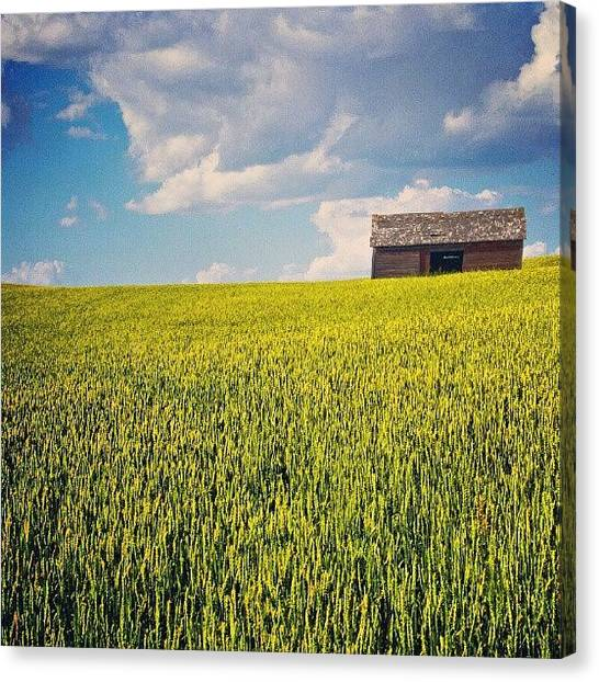 Harvest Canvas Print - Rising Up On A Sea Of #wheat by Michael Squier