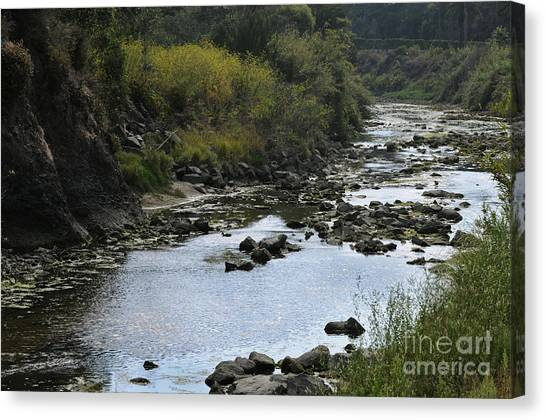 River At The Golf Course Laguna Canvas Print by Nelly Marziale
