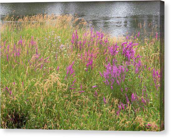 River Flowers Canvas Print by Fred Russell