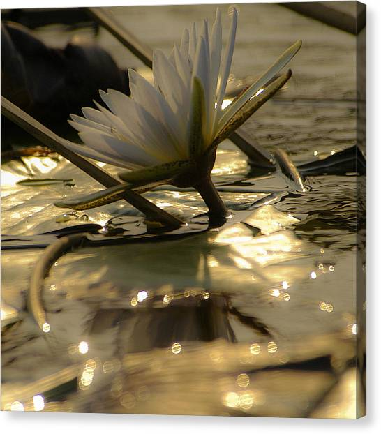 River Lily Canvas Print