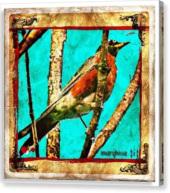 Edit Canvas Print - Robin Perch  by Mari Posa