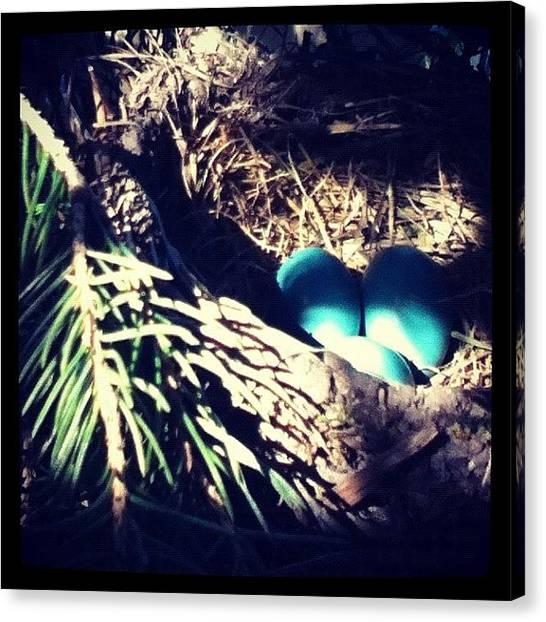 Robins Canvas Print - #robineggs #robin #bird #eggs by Natalie Raymond