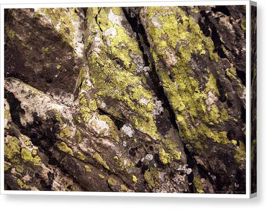 Rock Wall 1 Canvas Print by Mark Ivins