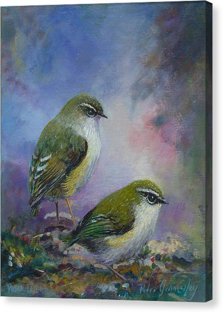Rock Wren New Zealand Canvas Print by Peter Jean Caley