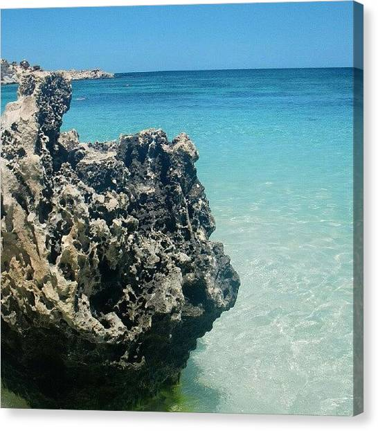 Ocean Animals Canvas Print - Rockness by Dave  Cassidy