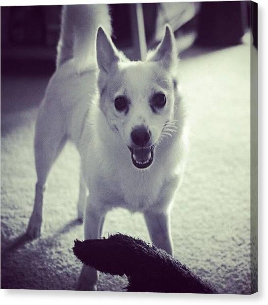 Puppies Canvas Print - Rocko ! #cutedog #pet #puppy #play by Mandy Shupp
