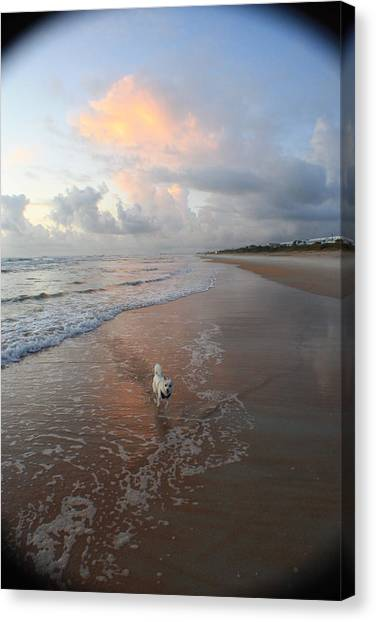 Rocko At Sunrise Canvas Print