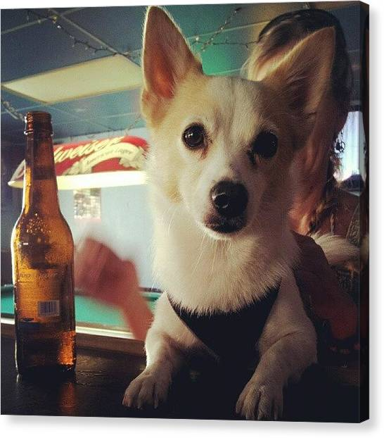 Beer Canvas Print - Rocko Came To Visit Me At Wrk Today ! by Mandy Shupp