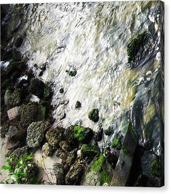 Indians Canvas Print - #rocks #moss #indian #river #merritt by Michael Hughes