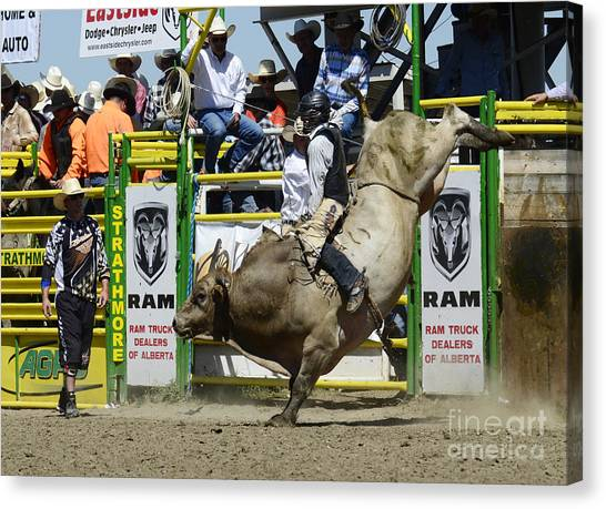 Bareback Canvas Print - Rodeo Bull Riding Star by Bob Christopher